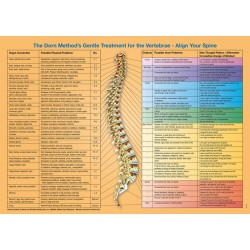 Spine Organ Connections Poster english download