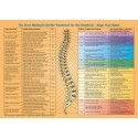 Dorn Spine Organ Connections Poster english